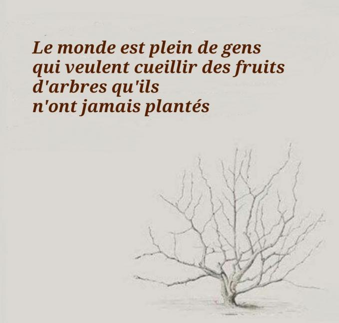 Fruits d arbres francais